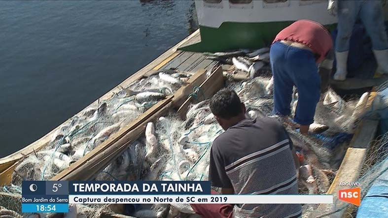 captura-de-tainha-despenca-no-norte-de-sc-em-2019.jpg